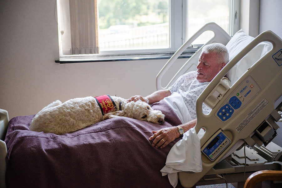 Senior Patient with a Therapy Dog in Hospital Bed