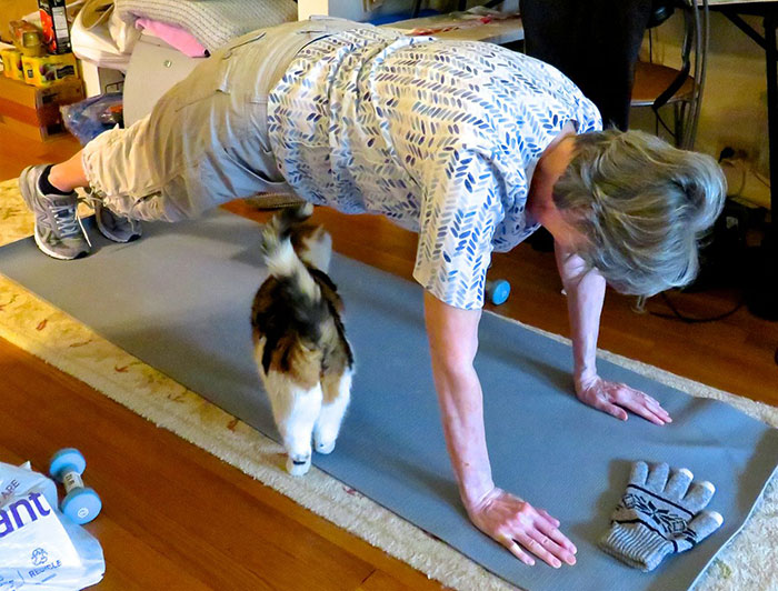 older adult exercising on mat with cat walking under